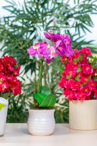 Making and using a homemade orchid fertilizer will help your plants stay healthy,