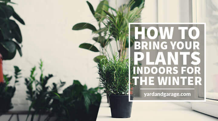 how to bring plants indoors for the winter