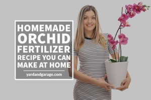 diy fertilizer for orchids