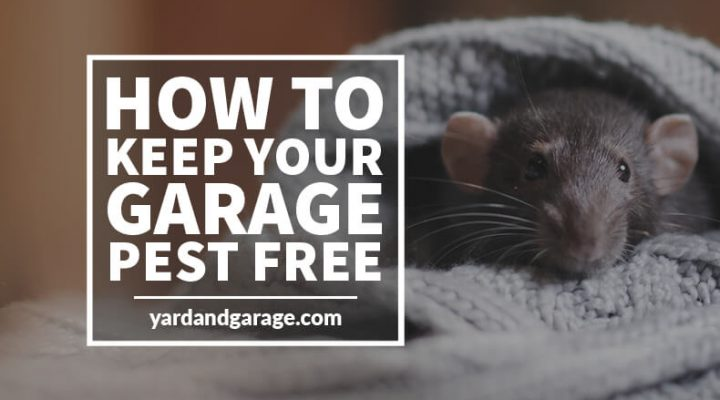 how to keep garage pest free