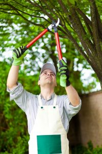 Man pruning tree limb