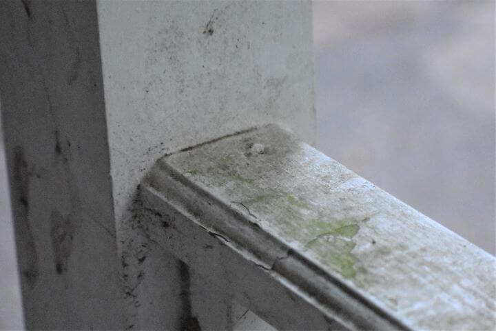 Algae on porch railing