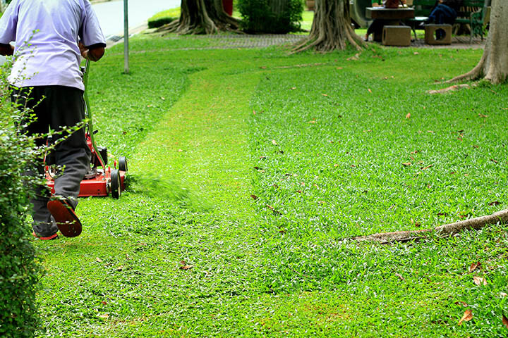 discharging grass clippings onto lawn