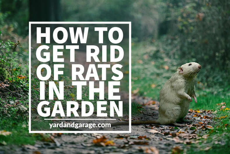How to Get Rid of Rats Outside | Yard and Garage