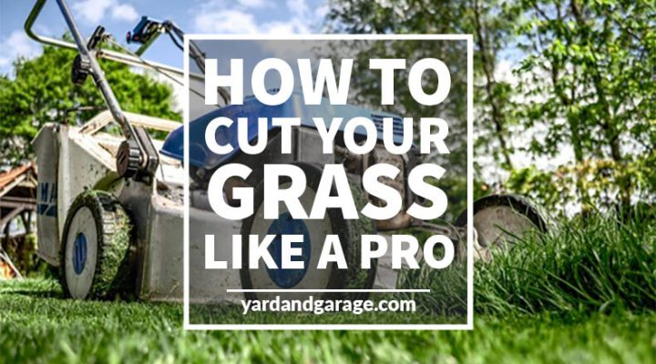 How to Cut Your Grass Like a Professional