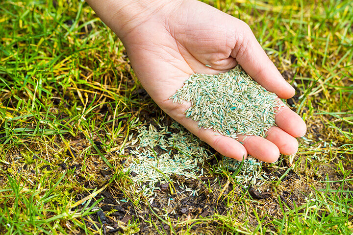 handful of grass seed