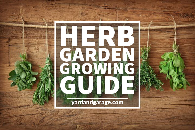 Herb Garden Guide – How to Grow the Best Herbs