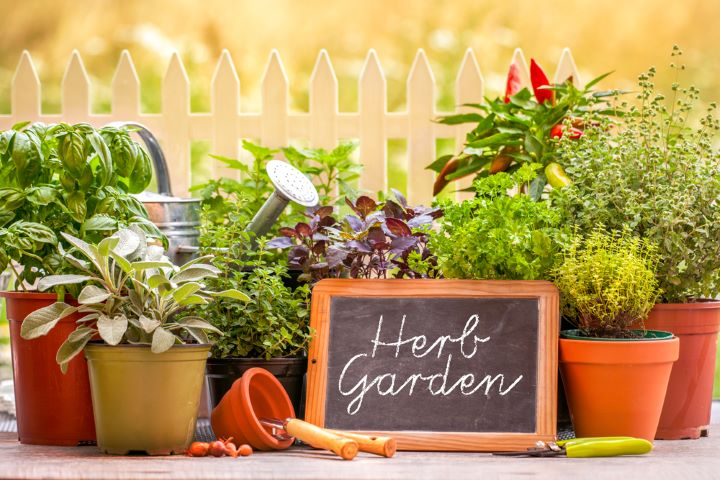 container garden filled with herbs