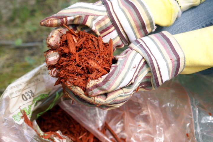 woman holding red gardening mulch