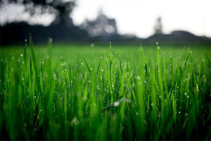 close up of grass with water droplets on it