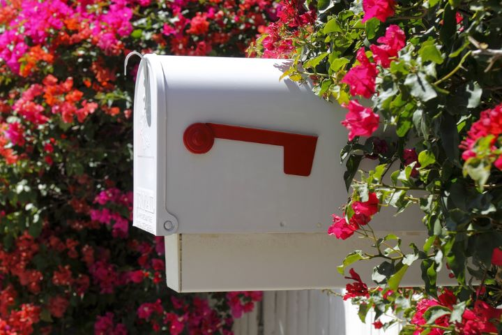Mailbox surrounded by flowers