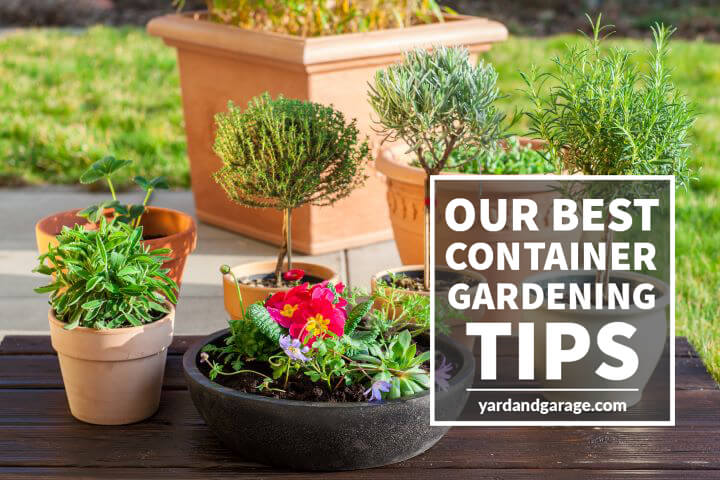 10 Helpful & Easy Container Gardening Tips