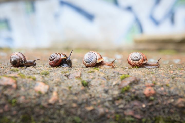 a line of snails in dirt