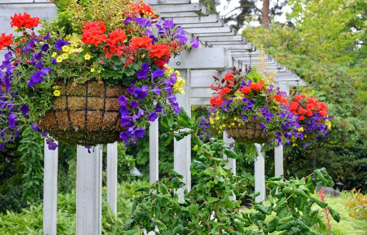 colorful hanging baskets of flowers
