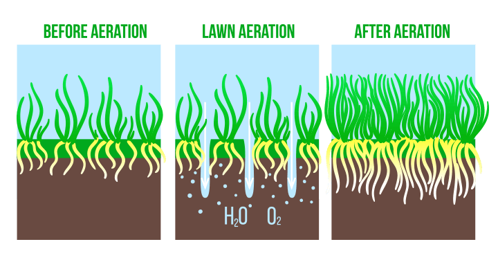Lawn aeration explainer