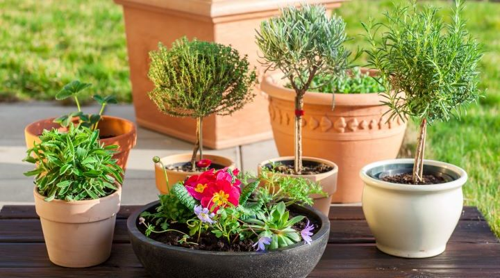 variety of planters