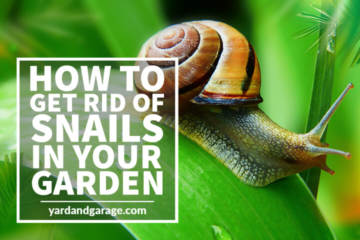 How to Get Rid of Snails in Your Garden