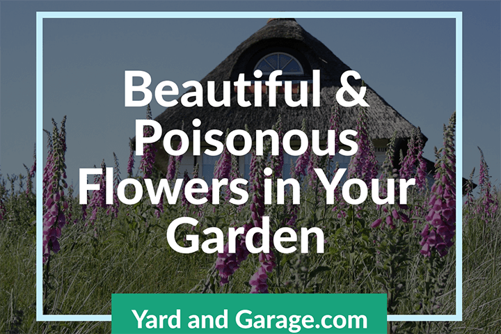 Beautiful Poisonous Flowers in Your Garden