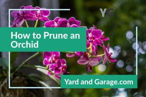 Orchid Pruning Tips
