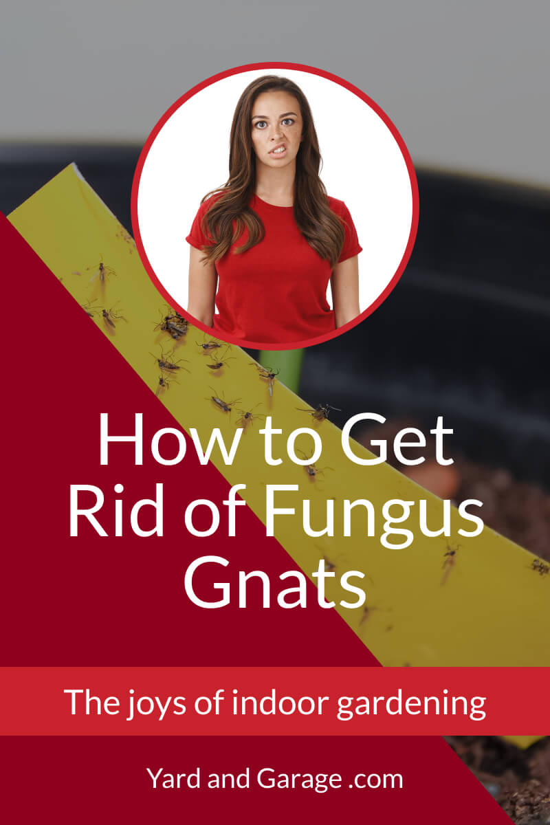 How to Get Rid of Fungus Gnats | Yard and Garage
