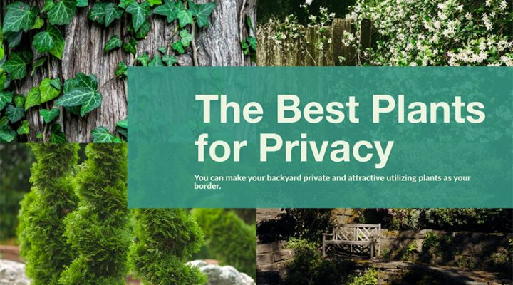 Best Plants for Backyard Privacy