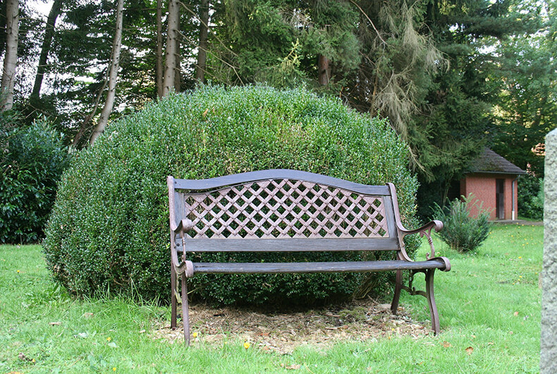 Large boxwood plant behind a bench