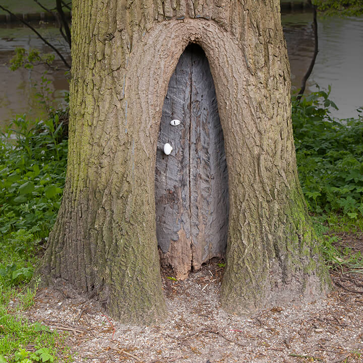 magical looking door inside the base of a tree
