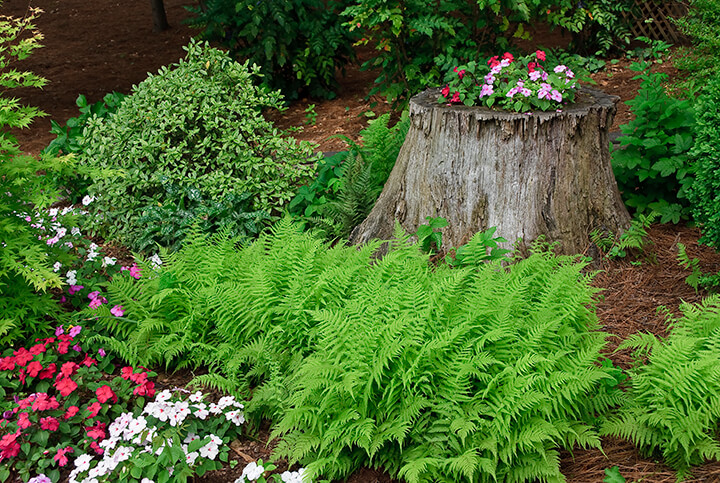 flowers planted in a tree stump