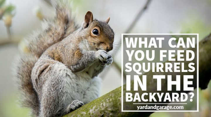 feeding squirrels guide