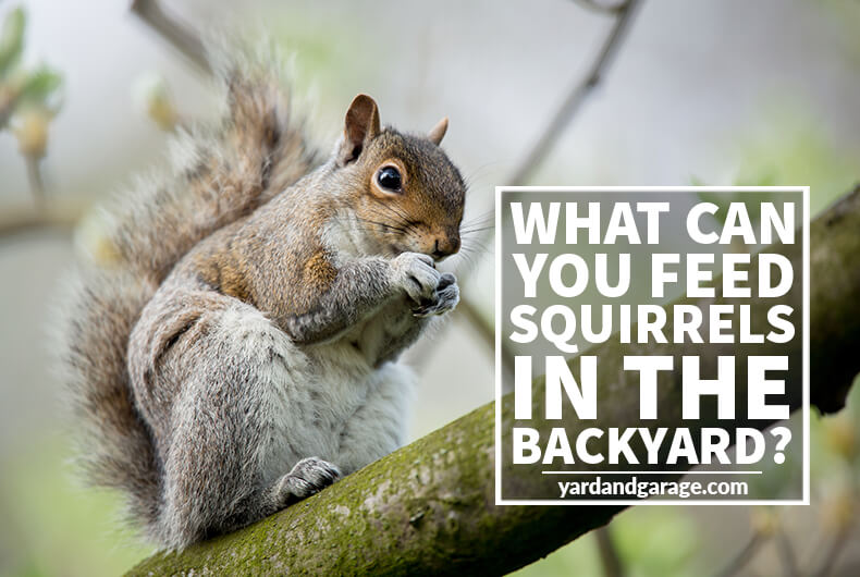 What Can You Feed Squirrels in Your Backyard?