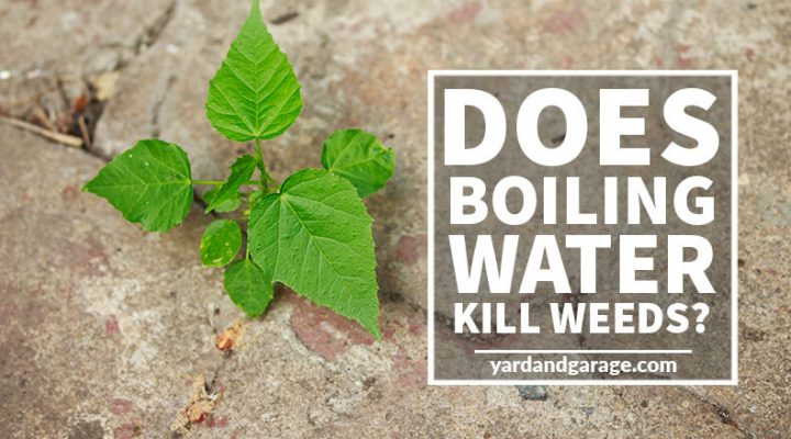 Does Boiling Water Kill Weeds