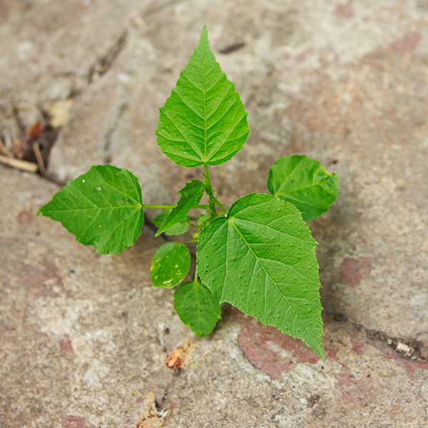 weeds growing in a concrete crack