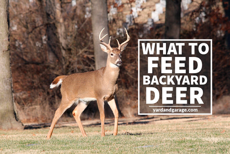 What to Feed Deer to Attract Them to Your Backyard