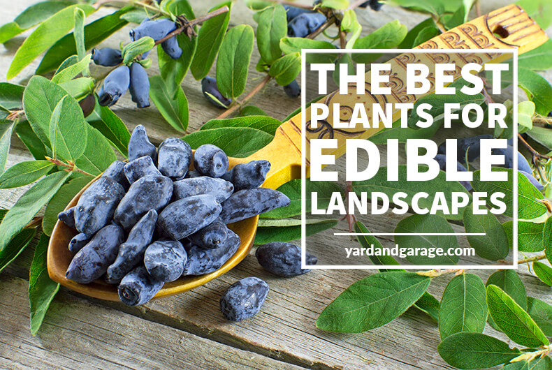 What Are The Best Plants For an Edible Landscape?