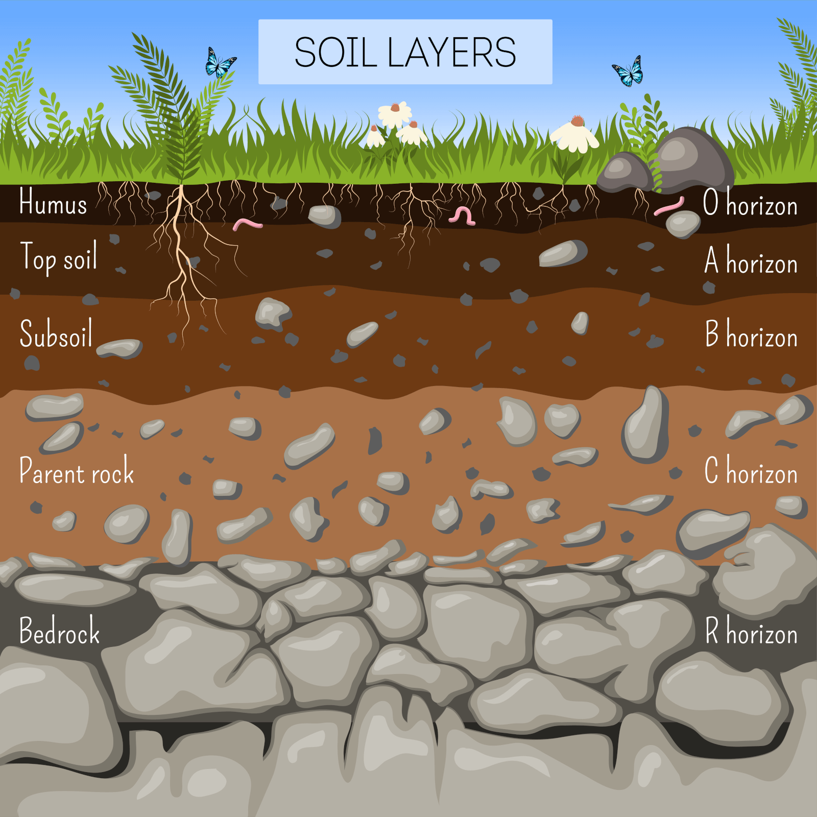 soil layers diagram