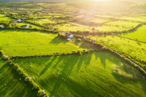 Aerial view of lush green pastures