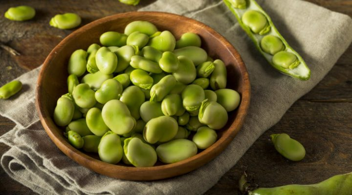 bowl of raw fava beans