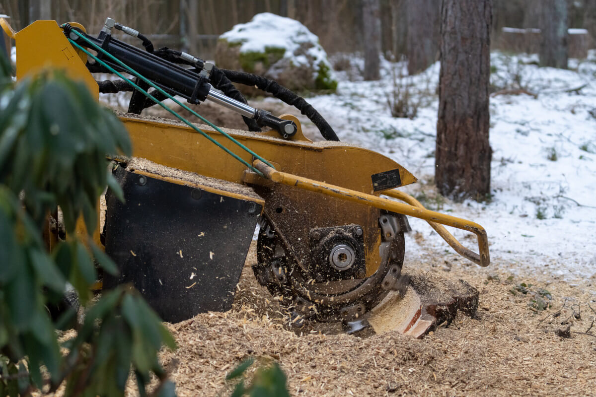 stump grinder actively grinding down a tree stump in the snow